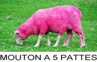 mouton_5_p_200